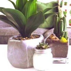 7 Efficient House Plants That Help Purify Your Indoors